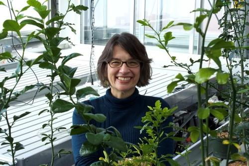 Vivian Irish in the new greenhouse