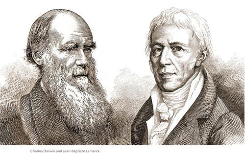 sketches of charles darwin and jean baptiste lamarck