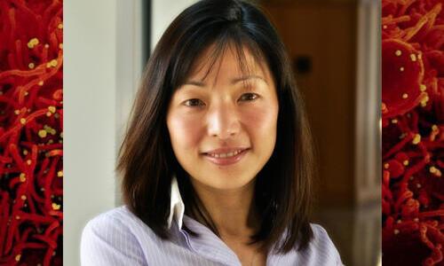 photo of akiko iwasaki