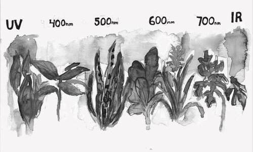 black and white ink drawing of plants