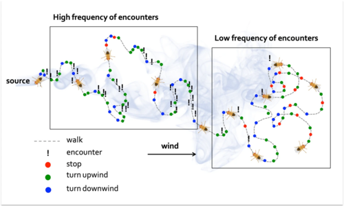 figure of fly travel encounters