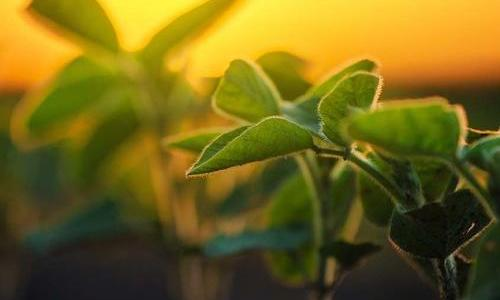 Plants with yellow sun background