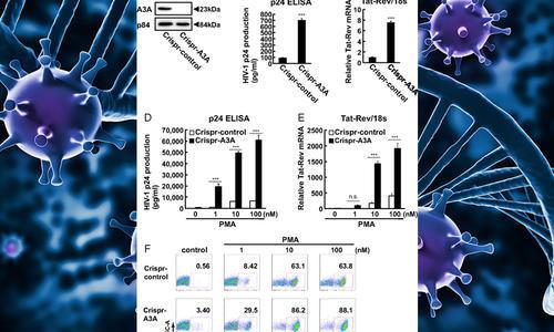 apobec3a regulates spontaneous hiv1 reactivation